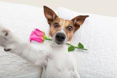 Selfie del perro del día de tarjetas del día de San Valentín fotografía de archivo libre de regalías