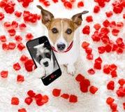 Selfie felice del cane dei biglietti di S. Valentino immagine stock libera da diritti