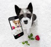 Selfie feliz del perro de las tarjetas del día de San Valentín fotografía de archivo