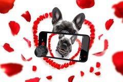 Selfie feliz del perro de las tarjetas del día de San Valentín imagen de archivo