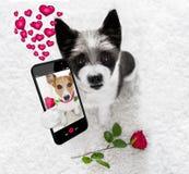 Selfie feliz del perro de las tarjetas del día de San Valentín fotos de archivo