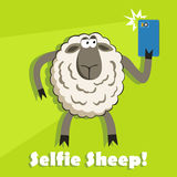 Selfie goofy sheep holding smartphone. Vector. Royalty Free Stock Photography