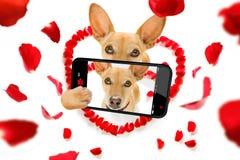 Selfie heureux de chien de valentines Photos stock
