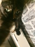 Selfie kota cukierki fotografia stock