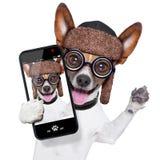 Selfie louco mudo do cão fotografia de stock