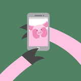 Selfie makes a pig. Farm animal photographs themselves. Vector i Stock Image