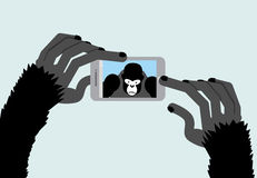 Selfie Monkey. Black Gorilla photographs. Animal and a Smartphon Stock Image