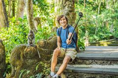 Selfie with monkeys. Young man uses a selfie stick to take a photo or video blog with cute funny monkey. Travel selfie with. Wildlife in Bali royalty free stock image