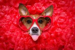 Selfie rose de valentines d'amour de chien Photo libre de droits