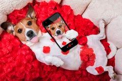Selfie rose de valentines d'amour de chien Photographie stock