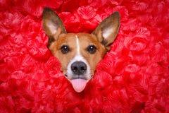 Selfie rose de valentines d'amour de chien Photographie stock libre de droits