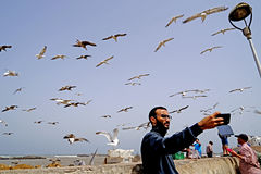 Selfie with seagulls at Essaouira royalty free stock photography
