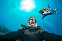 Selfie subacqueo con lo squalo bianco pronto ad attaccare immagini stock libere da diritti