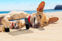 Selfie summer dog Royalty Free Stock Image