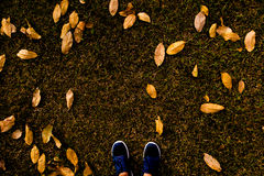 Selfie top view. Selfie of feet with running shoes on grass floor with leaf covered in city park Stock Photography