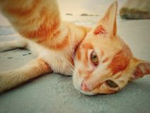 Selfie triste del gatto Fotografia Stock Libera da Diritti