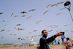 Selfie z seagulls przy Essaouira Fotografia Royalty Free