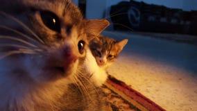 Selfiekatten Stock Foto's