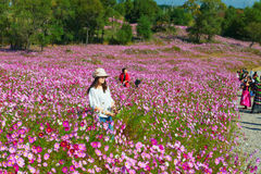 The selfprotrait woman in sea of flowers Stock Image