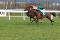Selim - horse racing in Prague Stock Photo