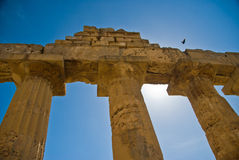 Selinunte Columns with flying bird Stock Images