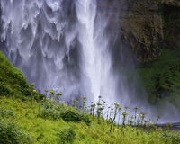Seljalandfoss cascade. Close up at foot of waterfall with yellow vegetation and wildflowers in the foreground royalty free stock images