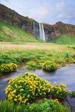 Seljalandsfoss - belle cascade en Islande Photos libres de droits