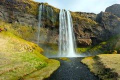 Seljalandsfoss nedgångar från Front Iceland Arkivfoto