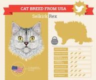 Selkirk Rex Cat breed  infographics Stock Image