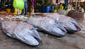 Sell fish  on a street market in Thailand. KOH CHANG, THAILAND - JANUARY 22 2015: Sell fish  on a street market in Thailand Stock Image