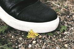 Sellado abajo de la pequeña flor Fotografía del concepto de la violencia imagenes de archivo