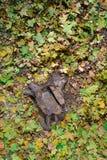 Selle el árbol en parque del otoño Imagen de archivo libre de regalías
