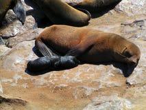 Selle la mama y el cachorro que duermen en la playa Foto de archivo