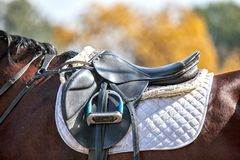 Selle sur un cheval images libres de droits