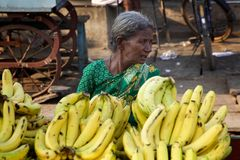 Seller of Bananas. An old Indian woman sells Bananas in the Indian town of Kurnool Royalty Free Stock Photography
