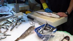 Seller cleans fish scales in the market. Cleaning fresh fish in a market near the seaport stock video footage