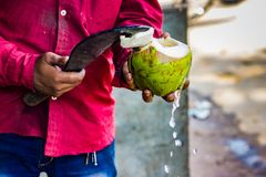 Seller cutting a raw coconut shell with sickle to take out cocon. Ut water. coconut water pouring out of coconut Stock Image