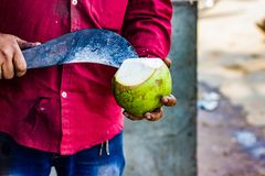 Seller cutting a raw coconut shell with sickle to take out cocon. Ut water Stock Images