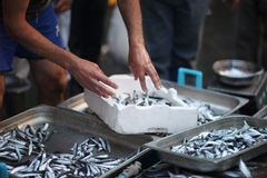 The seller in the fish market. Prepares for sale fresh anchovies stock photography