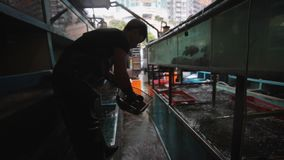 Fisherman market. Seller fisherman on market selects a fish stock footage