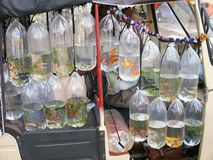 Seller of fishes of aquarium Stock Images