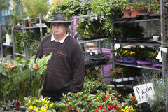 Seller of flowers at the Colambia flower market Royalty Free Stock Image