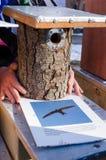 Seller hands handmade bird house nesting box Royalty Free Stock Image