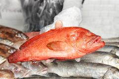Seller holding fresh fish. In supermarket Stock Images