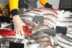 Seller holding fresh fish. In supermarket Royalty Free Stock Photos