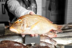 Seller holding fresh fish. In supermarket Stock Image