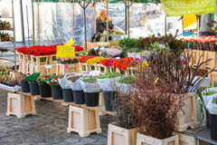 Seller packs flowers in the market  in the Dutch town Den Bosch. Stock Images