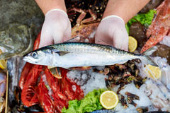 Seller presenting a mackerel fish. In fish store stock image