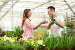Seller recommend flowers in greenhouses Stock Photo