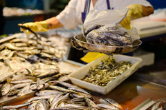 Seller's hands in yellow gloves weighting fresh. Picture of seller's hands weighting fresh fish in marketplace. Metallic weight with bag full of fish on blurred Stock Photo